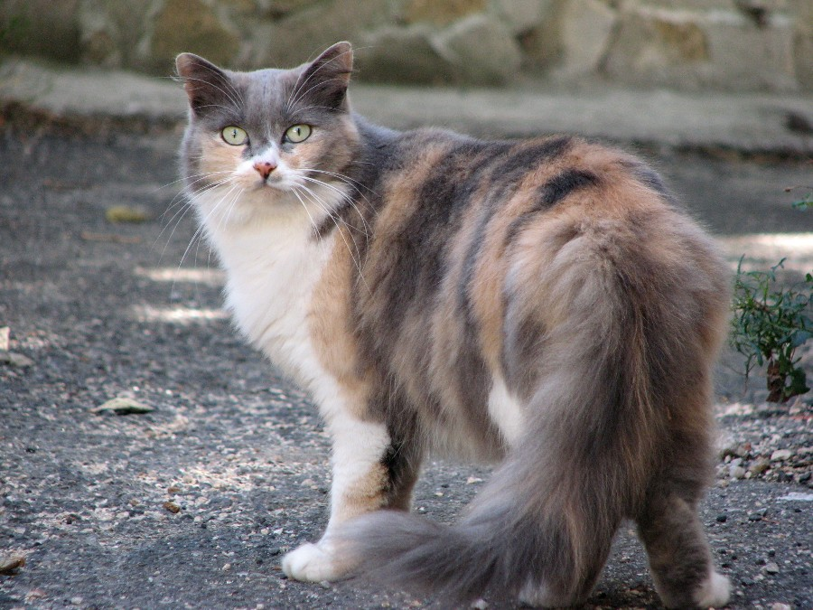 rencontre animaux chat