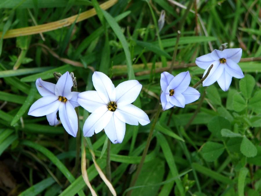 a943d50ed44 Plantes et fleurs sauvages bleues dans le Var et en Provence